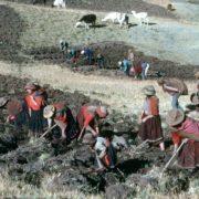 PERU. Picking potatoes. 1991.